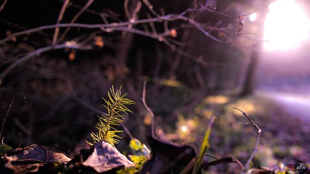 Sonnenstrahlen im Wald beim Schwenninger Moos 2/2, Bokeh