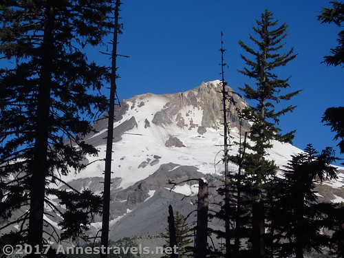 Peek-a-boo views to Mt. Hood from the Elk Meadows Trail, Mt. Hood National Forest, Oregon