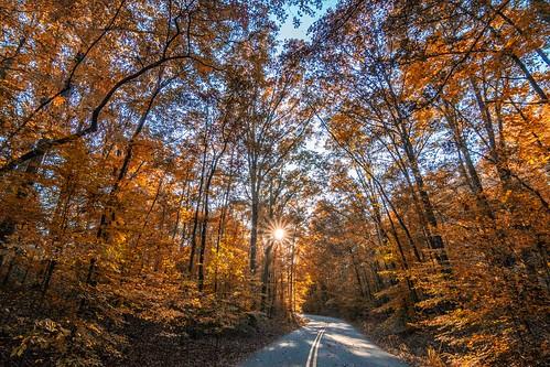 road travel trees usa brown sun fall nature catchycolors georgia landscape athens tokina sunburst pathways statebotanicalgarden twittertuesday