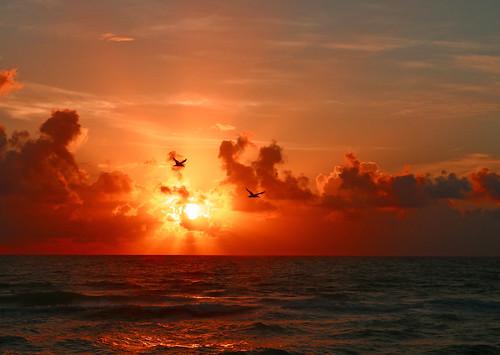 sky orange sun bird clouds sunrise florida pelican stuart
