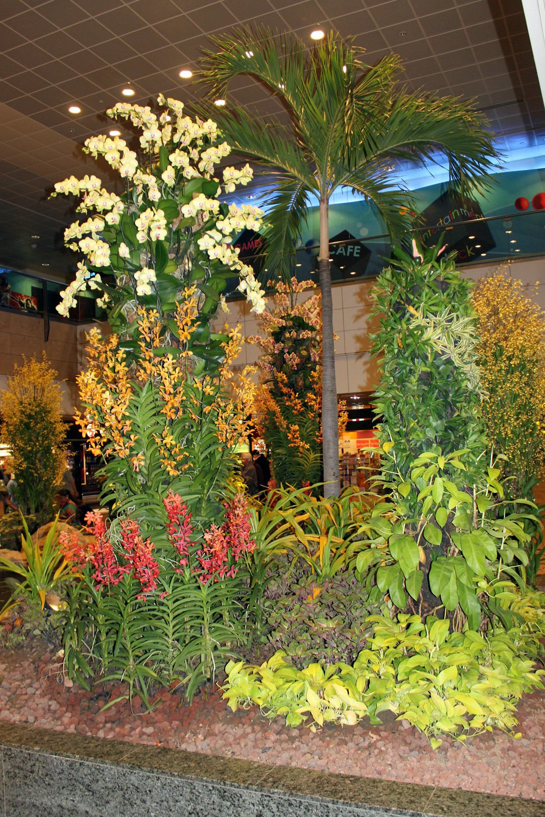 Orchideengarten im Changi Airport Singapur (1)