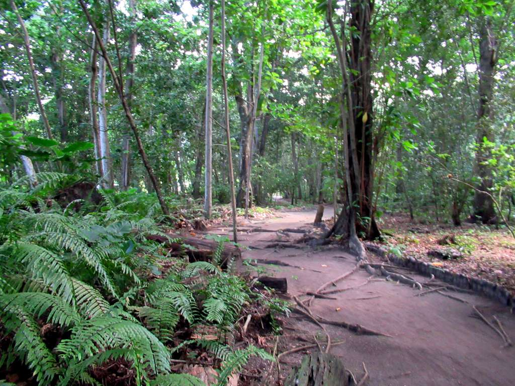 La Veuve Reserve Speciale