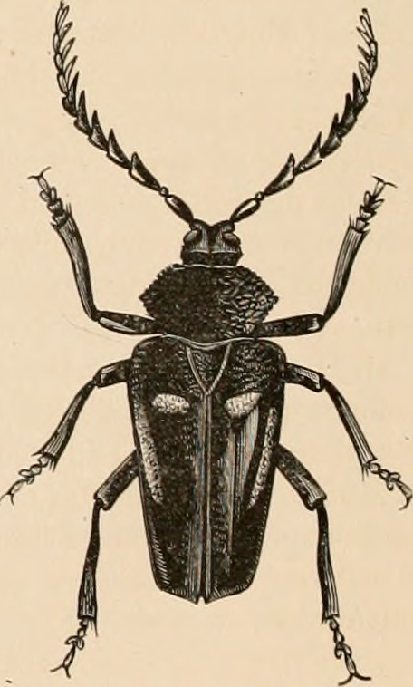These aren't true bugs, but still good to discuss. From the [Internet Archive Book Images](https://www.flickr.com/photos/internetarchivebookimages/21319498521)
