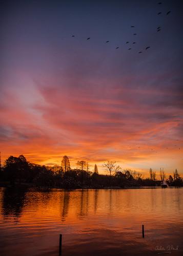 Zoo Lake Sunset | by AndrewCleland1