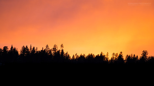 yellow golden goldenhour goldensunset lighthunting magiclight orange silhouette trees buskerud norway no