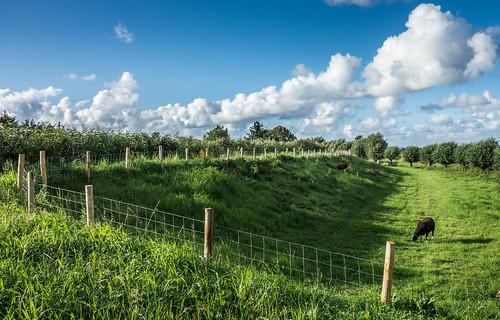 trees summer field grass clouds fence landscape sheep outdoor bluesky dike vlaardingen hff otherkeywords vlaardingervaart nederlandvandaag fencefriday