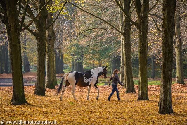 Autumn at Beeckestijn, part 3 (+1)