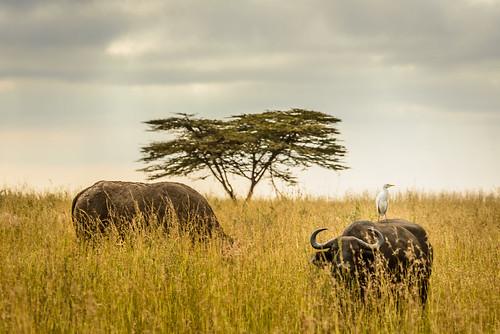 africa nature kenya wildlife nairobi safari hyena hiena nairobinationalpark hyaenidae