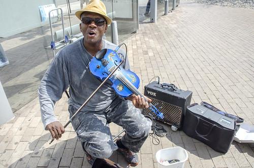 Blue fiddler
