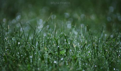 italy macro green nature water grass nikon bokeh details drop trentino