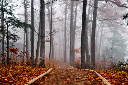 autumn ontario canada fall fog forest mood niagaraescarpment brucetrail greensville spencerfallsarea
