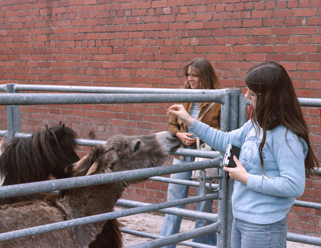 Horse Fair 1977