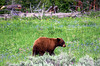 Yellowstone, foto: Karel Janů