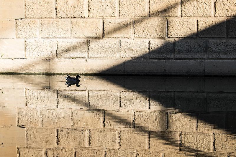El patico y la flecha