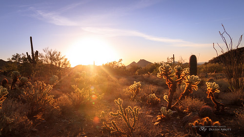 usa manualfocus lens rokinon12mmf2wideanglemirrorlesslens adobelightroomcc 2016 mirrorless sunrise flare dawn thousandwordimages dustinabbottnet travel comparison photography camera cactus arizona review canoneosm5 adobephotoshopcc photodujour dustinabbott scottsdale unitedstates us mcdowellmountains cholla whatcaughtmyeye youtube