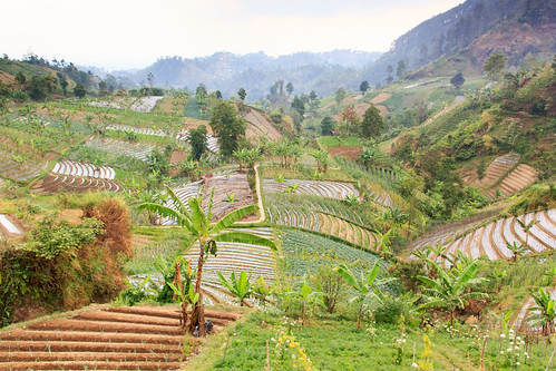 field indonesia java plantation indonesië plantage tawangmangu akker jawatengah