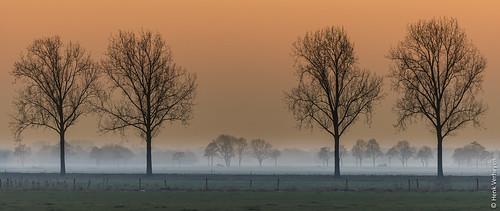 mist boom fog landscape landschap sunset tree zonsondergang overlangel koud cold
