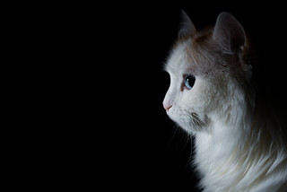 Profiled Cat | by Pasi Mammela
