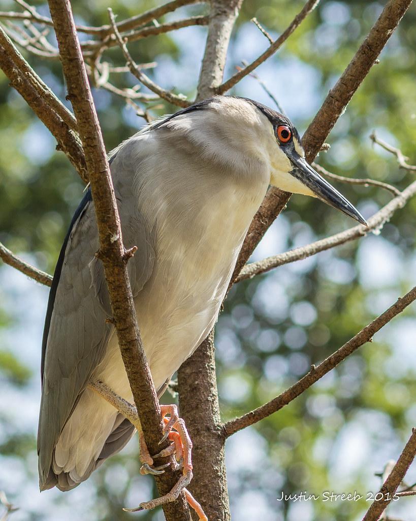 Maryland Zoo Bird 3
