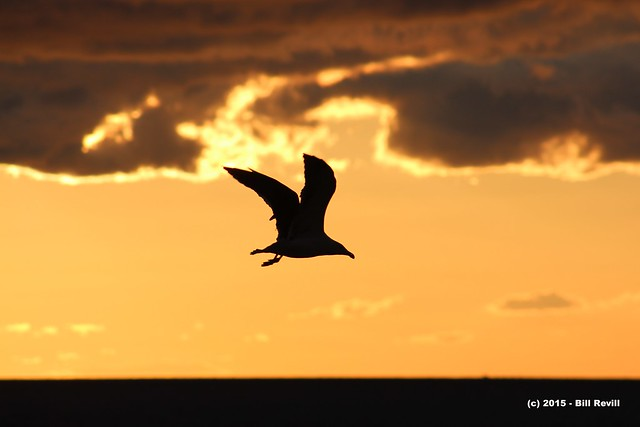Big bird flying across the sky...