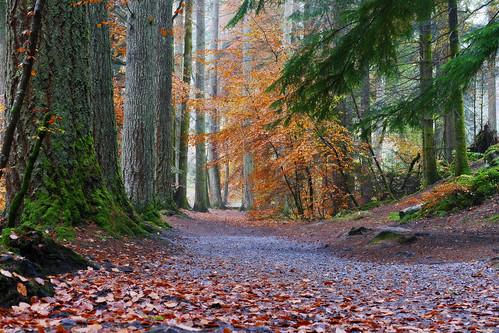 autumn trees nature landscape scotland outdoor autumnwatch ericrobbniven