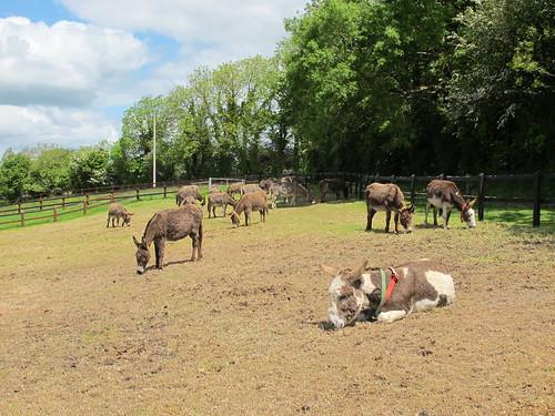 donkeysanctuary animal fence field rural cork ireland irish trees canong11 hff