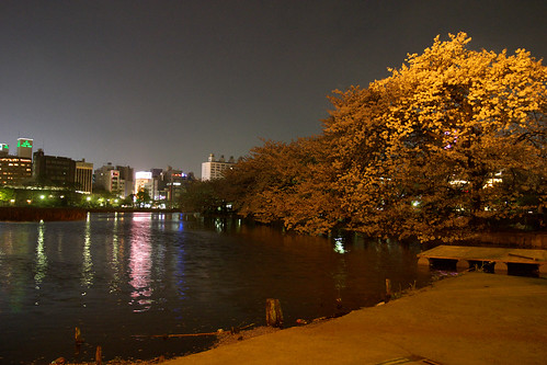 cherryblossom at night