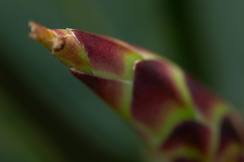 Plant close-up | by boncey