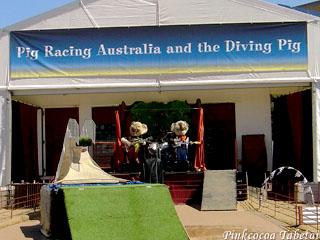 Pig Racing & Diving Pig