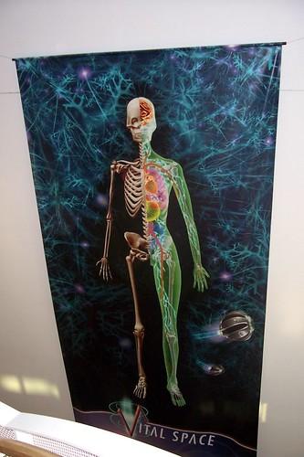 The ATC's Giant Anatomy Man