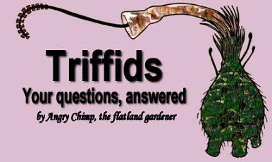 Triffids, Q&A