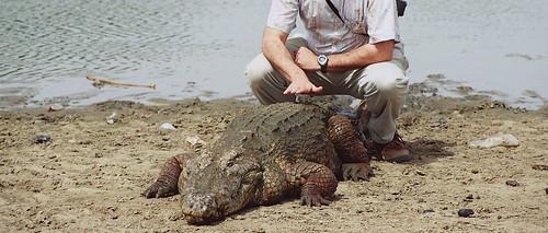 el Anónimo 'casi' se sienta encima de un cocodrilo
