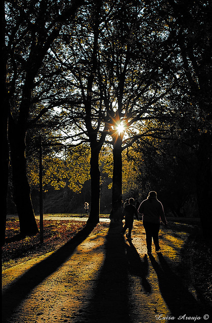 Sol num dia de outono.