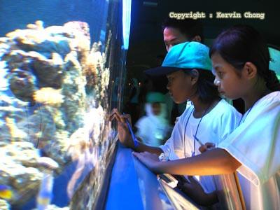 Coral-display