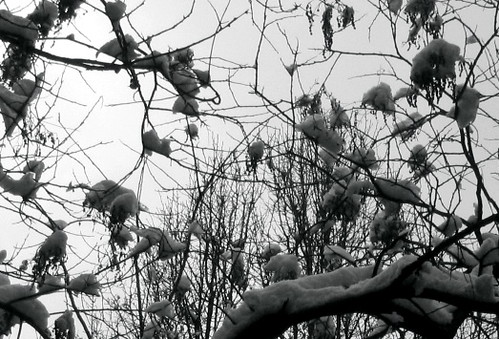 snow in trees, cont'd