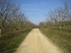 Dordogne Orchard
