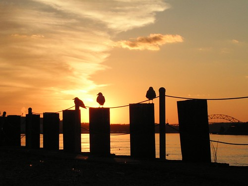 cape cod ma massachusetts sunset birds