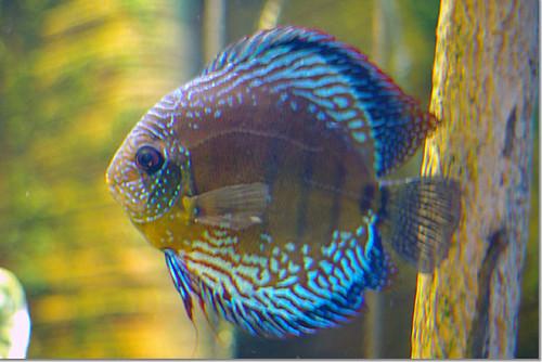 National Aquarium in Baltimore 15 photo by *istD