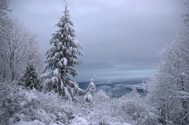 Snow on Sammamish