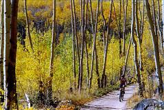 Mountain Biking among the Aspen