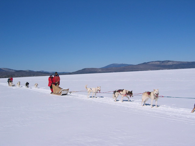 The dogsled
