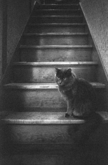 Shadow's on the stairs.