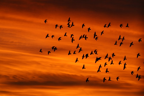 birds on orange | by jimw