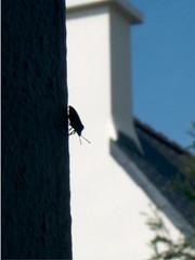 28 mars 2005, insecte descendant le long du mur