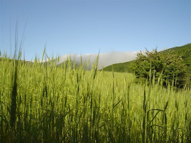 Grain in Ardebil - IRAN
