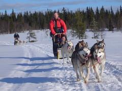 Dogsledding in Trysil