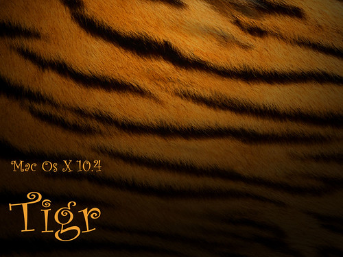 Tigr Wallpaper