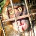 lomo_monkey