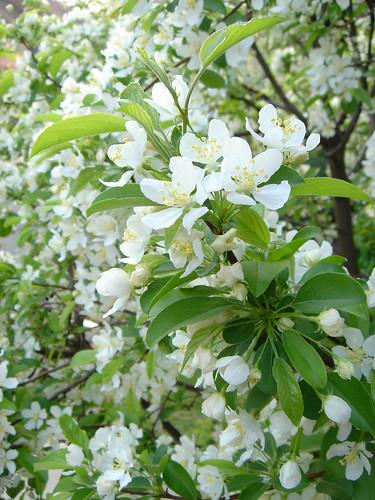 Tree-Flowers3