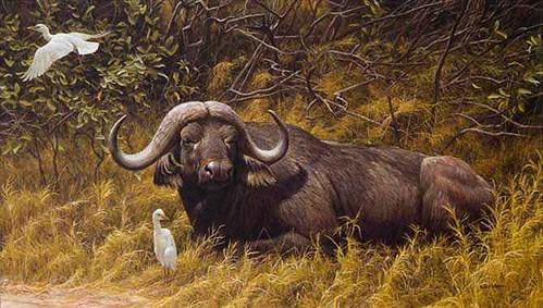bateman_-_resting_place-cape_buffalo_a